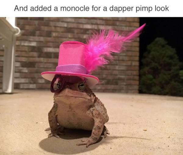 Who Knew Toads Need Hats As Well?