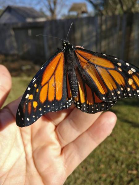 mujere repara mariposa