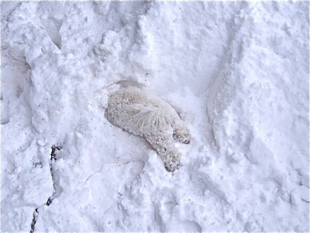 Snow Never Fails To Surprise Animals That Experience It For The First Time