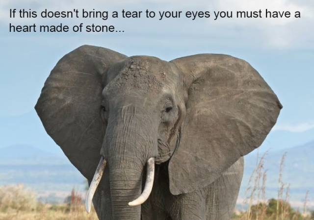 Elephants Always Remember…