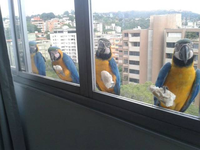 No Matter How High You Live Or Work, These Feathered Friends Will Reach You!