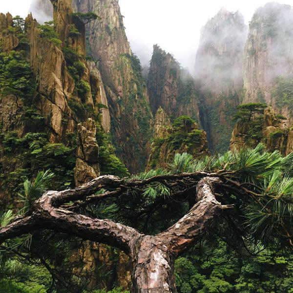 Nature's Beauty Is Unending…