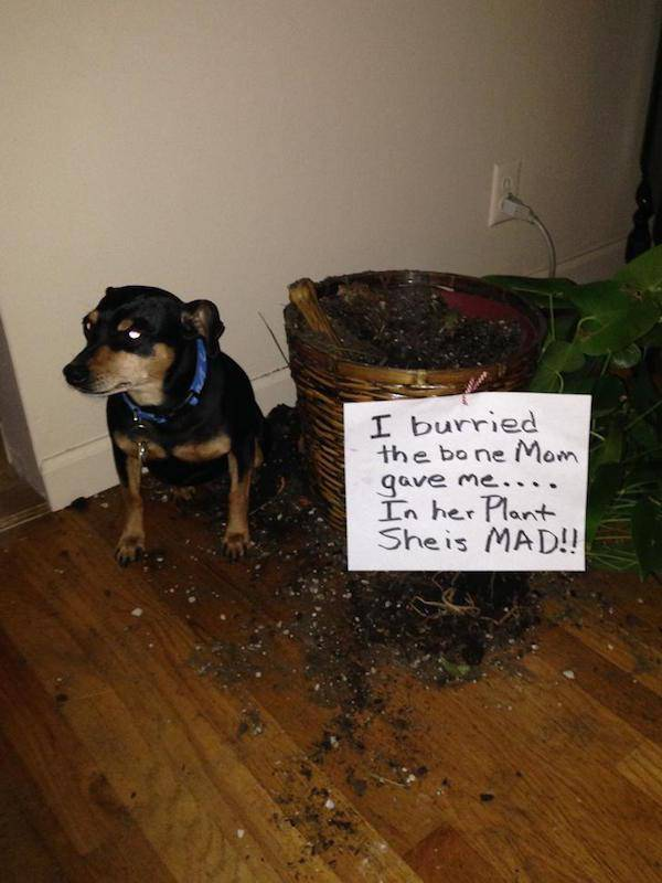 "Animals Have Their Own ""Hall Of Shame"""