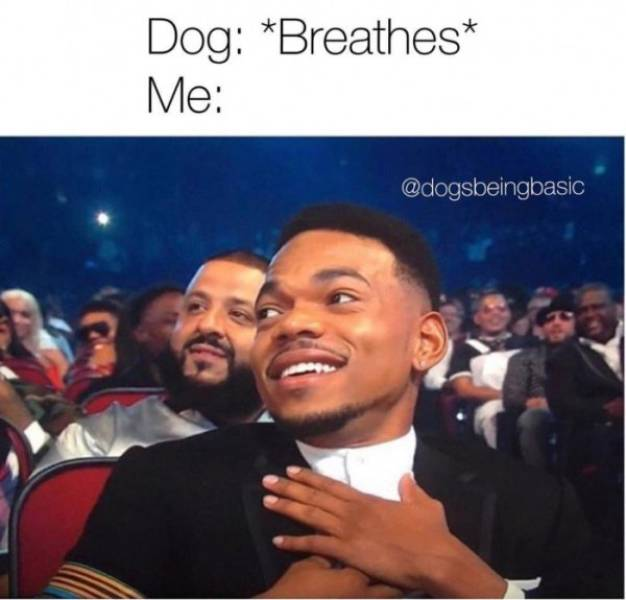 Pics And Memes That Can Actually Make Your Day