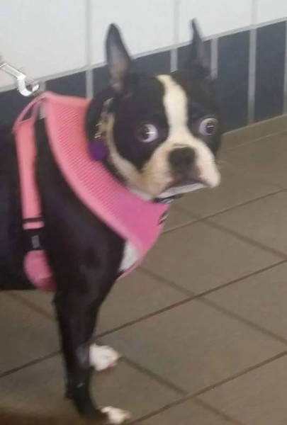 Dogs REALLY Don't Like Going To The Vet…