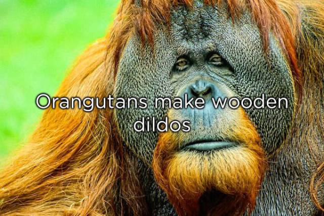 NSFW Facts You Should Probably Read Alone