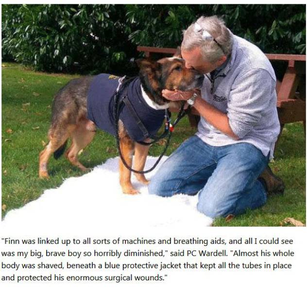 This Police Dog Never Backed Down