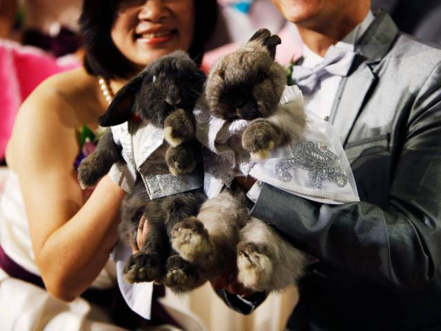 What Chinese Zodiac Brings You For This Year
