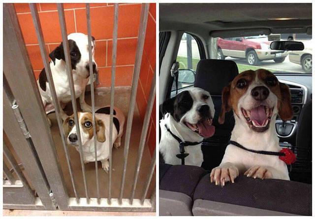 How Adoption Influences Lives Of Dogs
