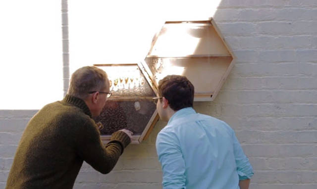 This Company Decided To Connect Bees And Humans For The Good Of Both