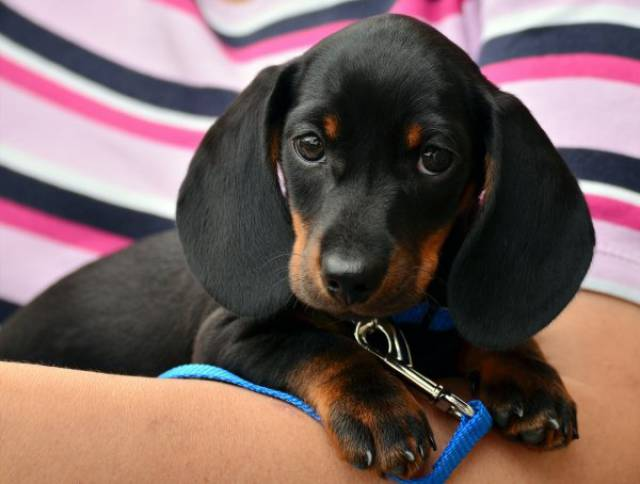 Most Loved Dogs From Each American State
