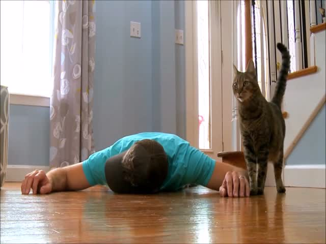 When Cat Understands That His Owner Is An Idiot