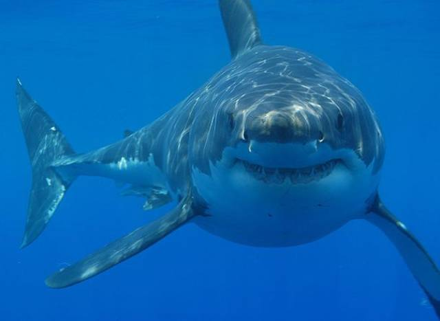 Beware Of These Animals As They Are The Deadliest In The World