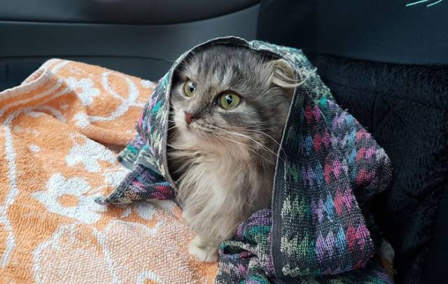 This Could Be The Last Day In This Cat's Life, But It Became The Happiest Day Instead