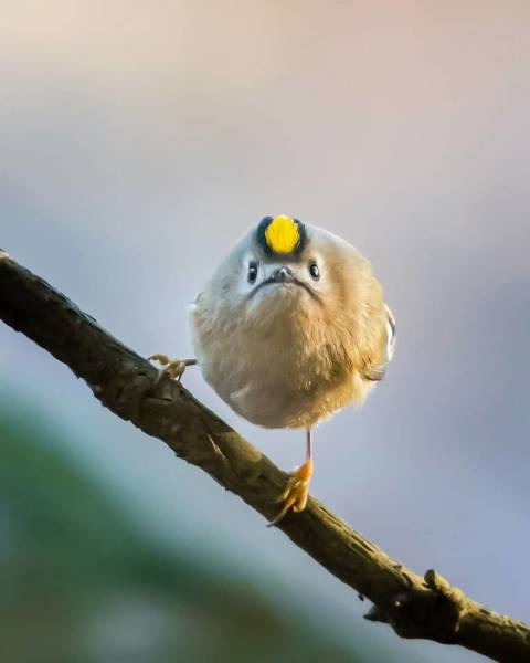 This Finnish Photographer Is Taking Possibly The Cutest Bird Photos You'll Ever See