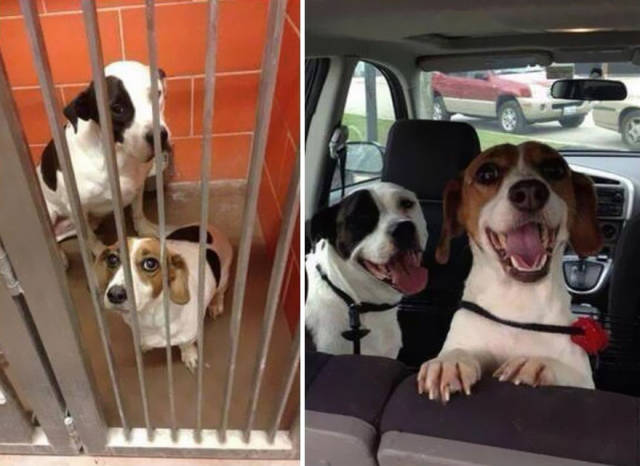 Adoption Drastically Changes Any Dog's Life