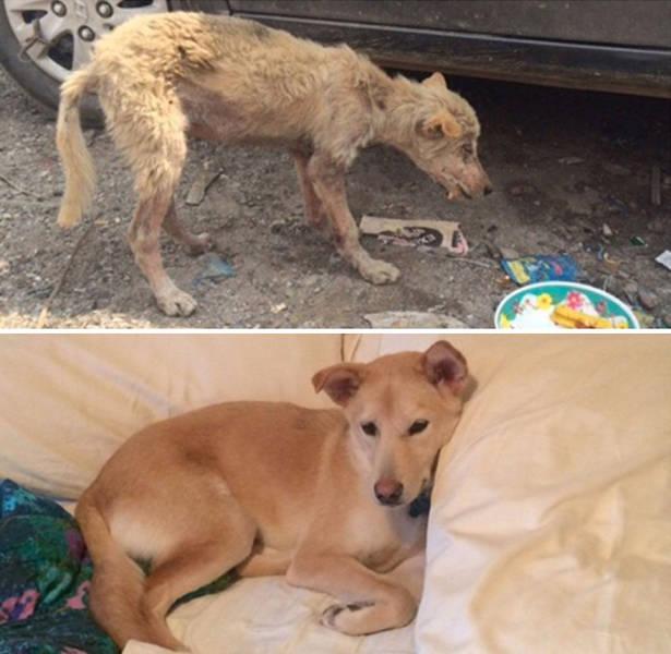 Adoption Drastically Changes Any Dog's Life