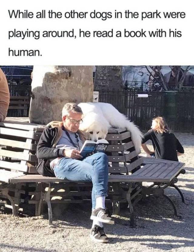 Best Memes About Human's Best Friends