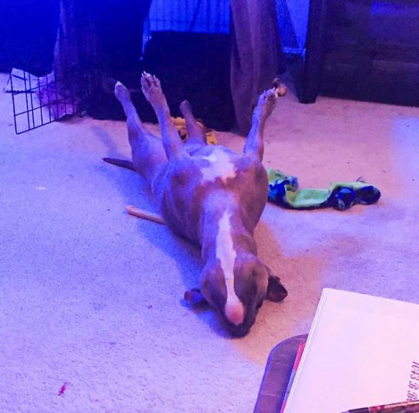 Isn't She The Weirdest Dog Ever?