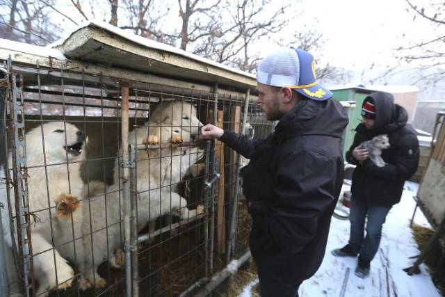 US Olympic Skier Gus Kenworthy Saves Lives Of 90 Dogs At South Korean Meat Farm