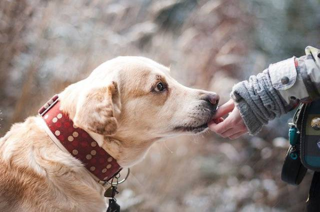 Scientific Facts About Why Dogs Are Awesome