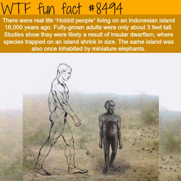 Facts To Boost Your Endless Knowledge Of Things