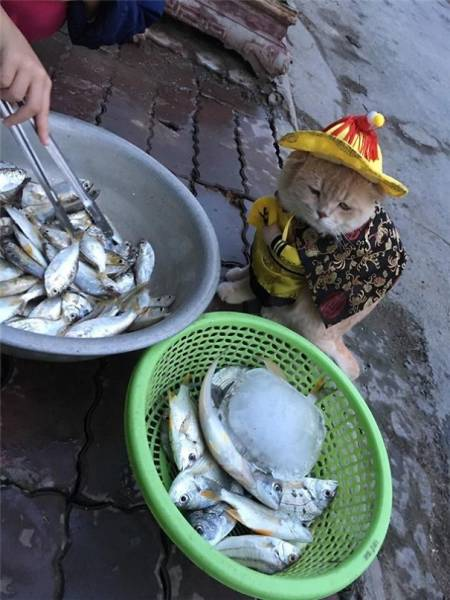 This Regular Fish Vendor From Vietnam Is Becoming Very Popular On The Internet