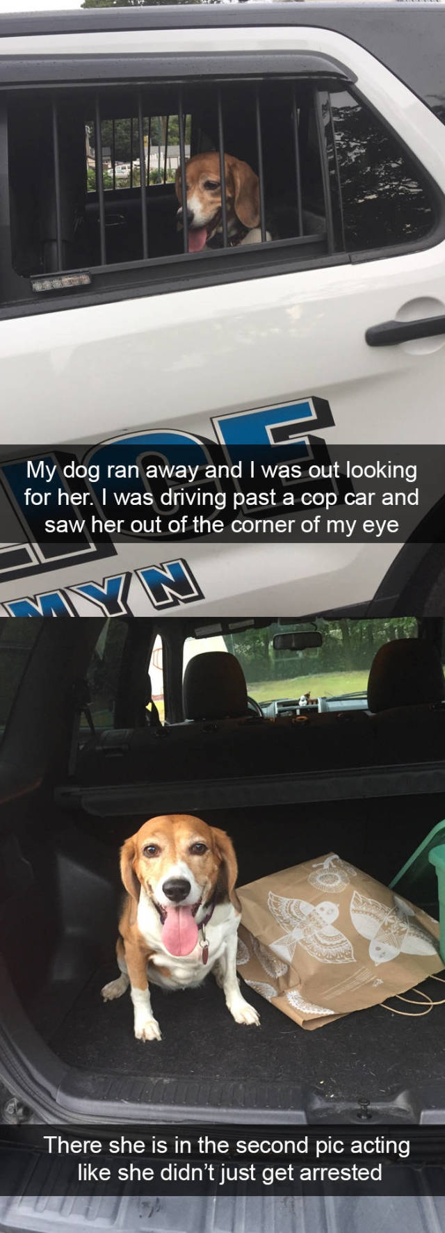 Dogs Are The Best Snapchat Material!