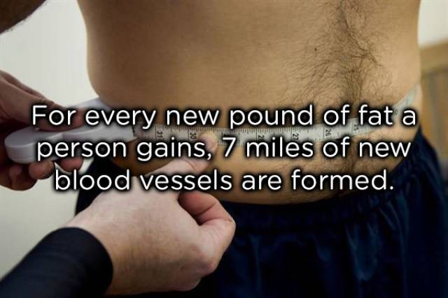 Our Bodies Are So Awesome!