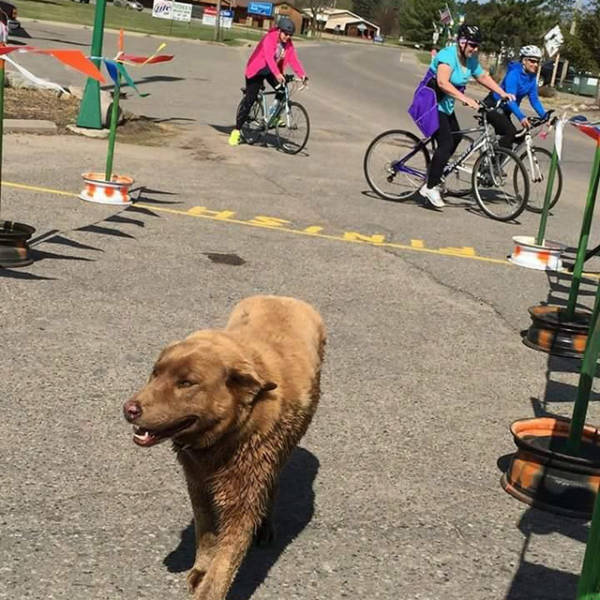 This Dog Became A Town Celebrity As Everybody Knows Him Better Than Even His Owners!