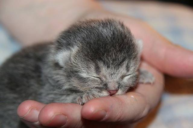 World's Smallest Animals Are Actually Ridiculously Small