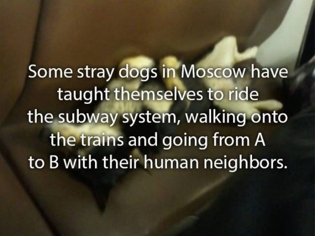 Dogs Are So Interesting To Tell Stories About