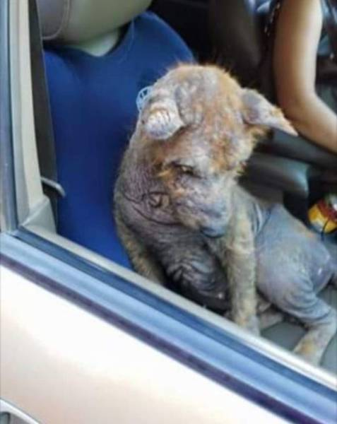 Dog Transformed Incredibly After Being Saved