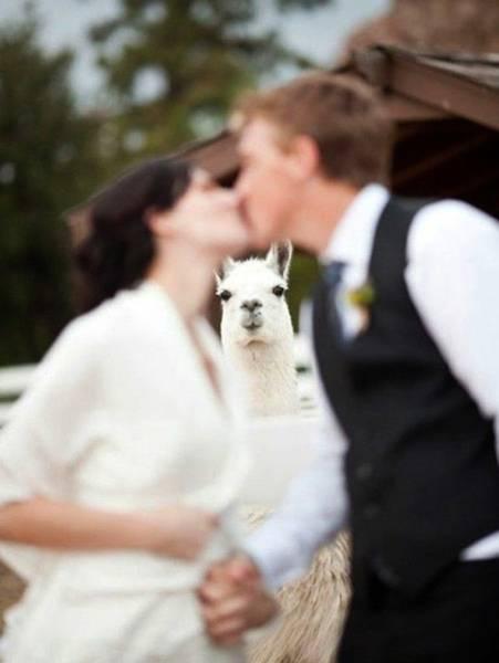 Who Said That Wedding Photos Have To Be Casual?!