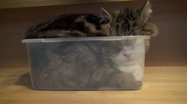 Cats Will Sit Anywhere They Can Fit In