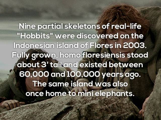 Useless Facts Are The Most Interesting Ones!