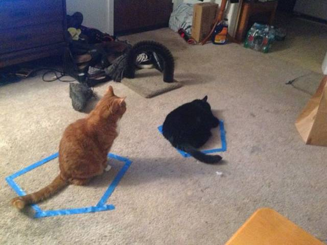 Cats And Circles Have Very Suspicious Relationships