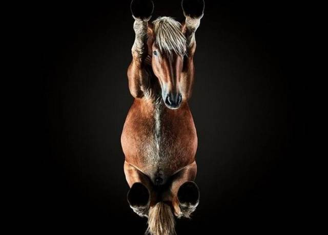 Horse Photos From A Very Unusual Angle