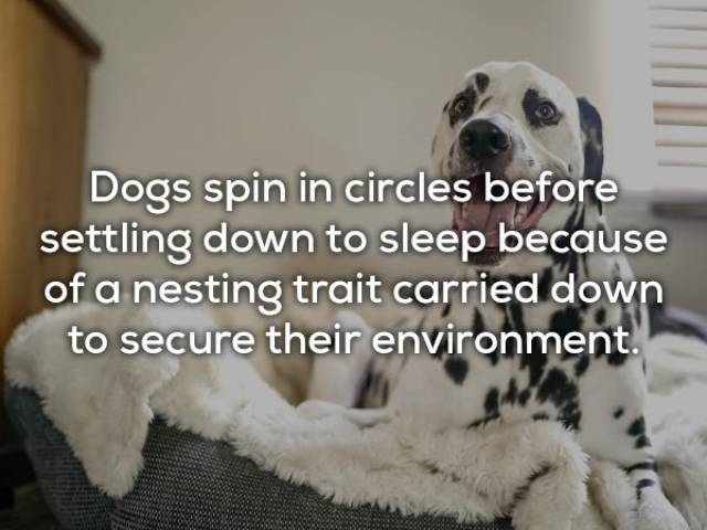 Cute Facts About Dogs