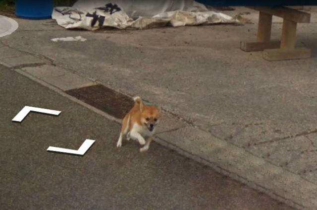 This Dog Chasing a Street View Car Is the Cutest Thing We've Seen on Google Maps