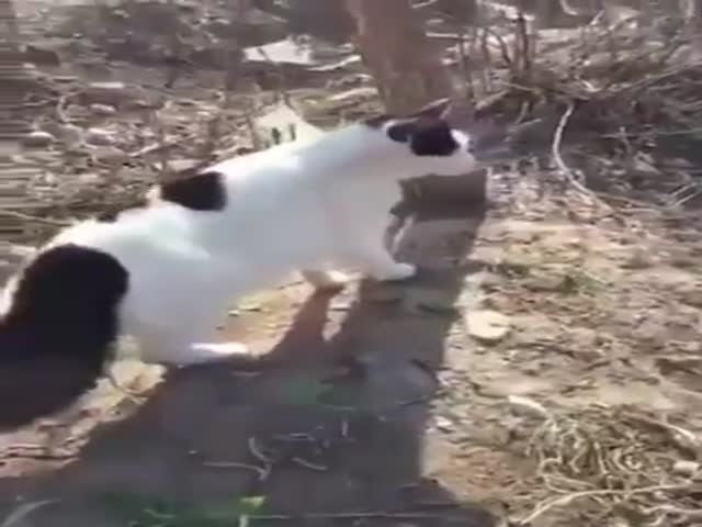 A Wild Pack Of Cats Attacks!