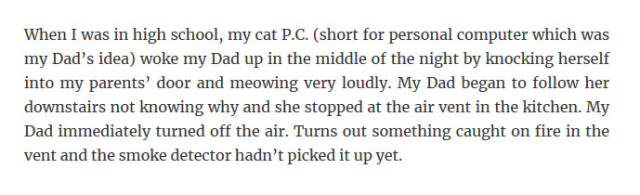 Great Stories About How Smart Our Pets Really Are
