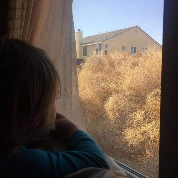 Tumbleweeds Have Invaded a California Town