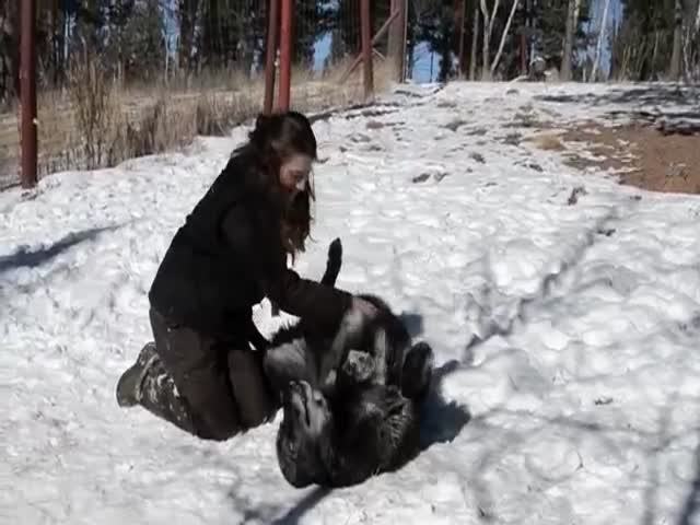 Wolves Love Beautiful Women Too