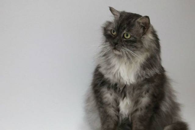 Rescued Cat Goes Through An Incredible Transformation
