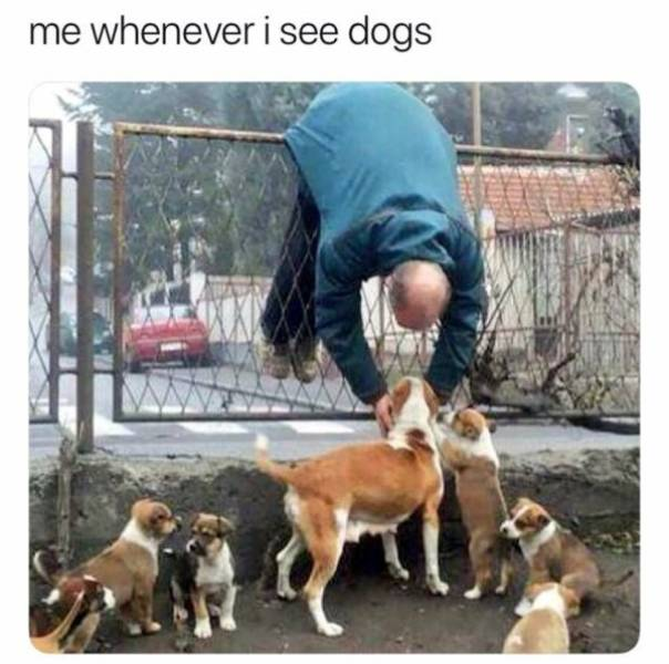 Dogs Are Always A Sight For Sore Eyes