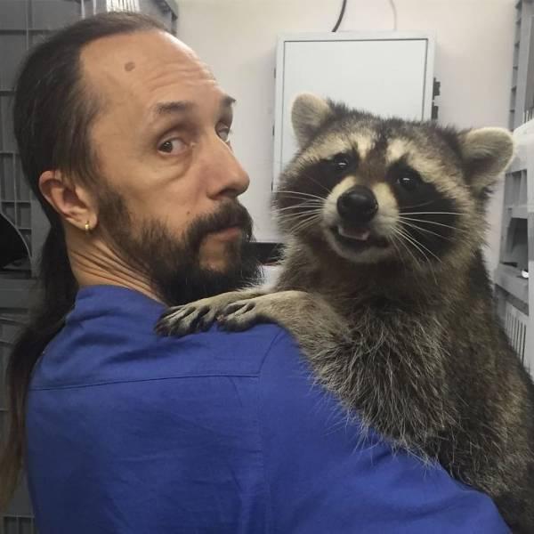 The Best Veterinarian Is A…Raccoon!