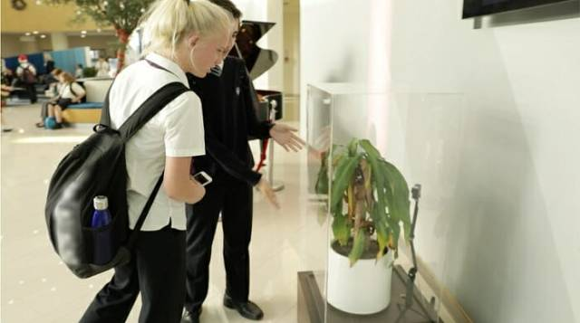To Show The Damage Bullying Causes, IKEA Conducts An Experiment With Two Plants