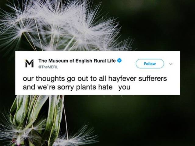 Don't Sneeze On These Allergy Season Memes