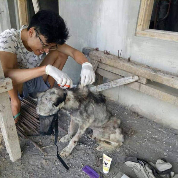 How A Saved Husky Looks Like Before & After She Was Saved From The Streets